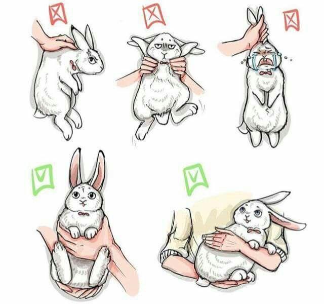 หิ้วหูกระต่าย