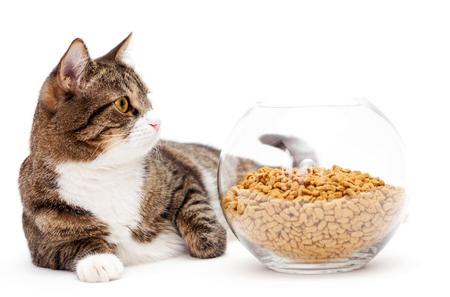 ชามใส่อาหารแมวและใส่น้ำ