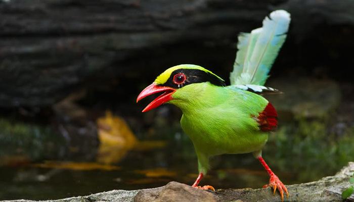 นกพูดได้