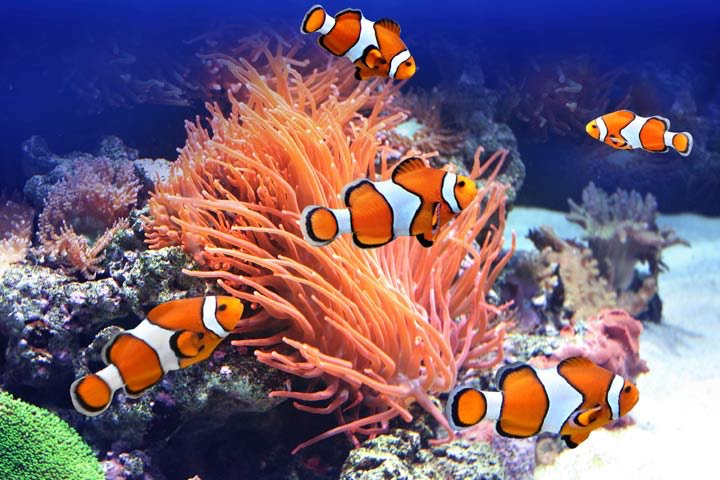 สายพันธุ์ปลาสวยงาม ที่มีสีสันสวยงามน่าเลี้ยง