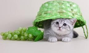 อุปกรณ์เลี้ยงแมว ที่ทาสแมวต้องมี
