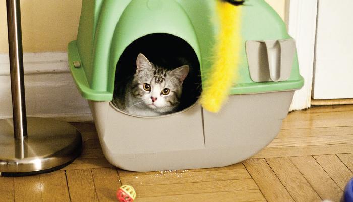 อุปกรณ์เลี้ยงแมว อุปกรณ์ที่ทาสแมวต้องมี