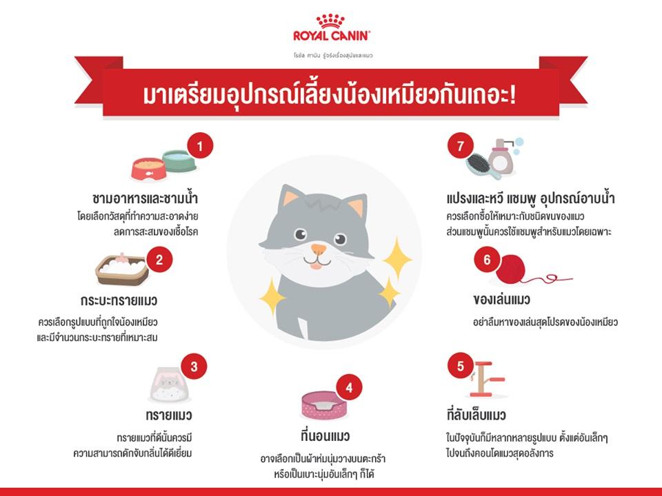 อุปกรณ์เลี้ยงแมว