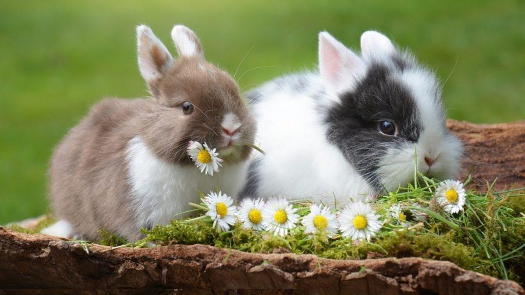กระต่าย สัตว์เลี้ยงที่เลี้ยงง่าย