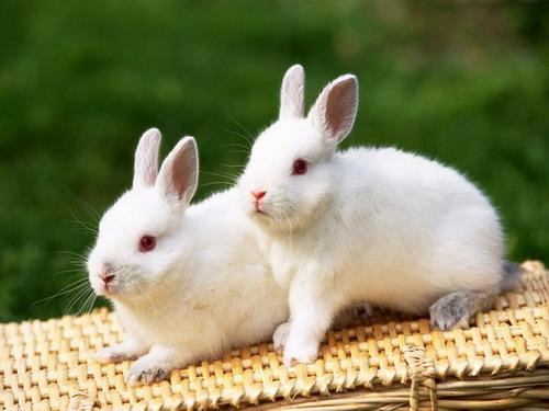 กระต่าย สัตว์เลี้ยงน่ารักขนนุ่มที่ใครๆก็หลงรัก