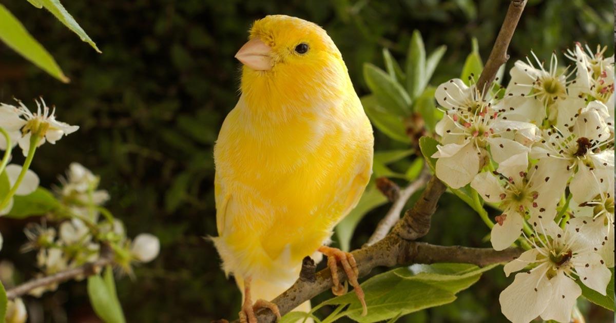 นกเสียงไพเราะ ที่ได้ยินเสียงแล้วรู้สึกเพลิดเพลิน