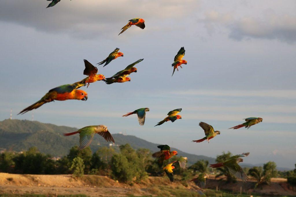 ฝึกนกบินอิสระ ต้องแน่ใจว่ามีขนขึ้นปกคลุมที่จะพยุงตัวเองได้