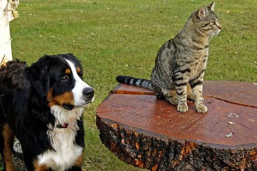 วิธีการทำหมันหมาแมว ไม่ให้สามารถขยายพันธุ์ได้อีก