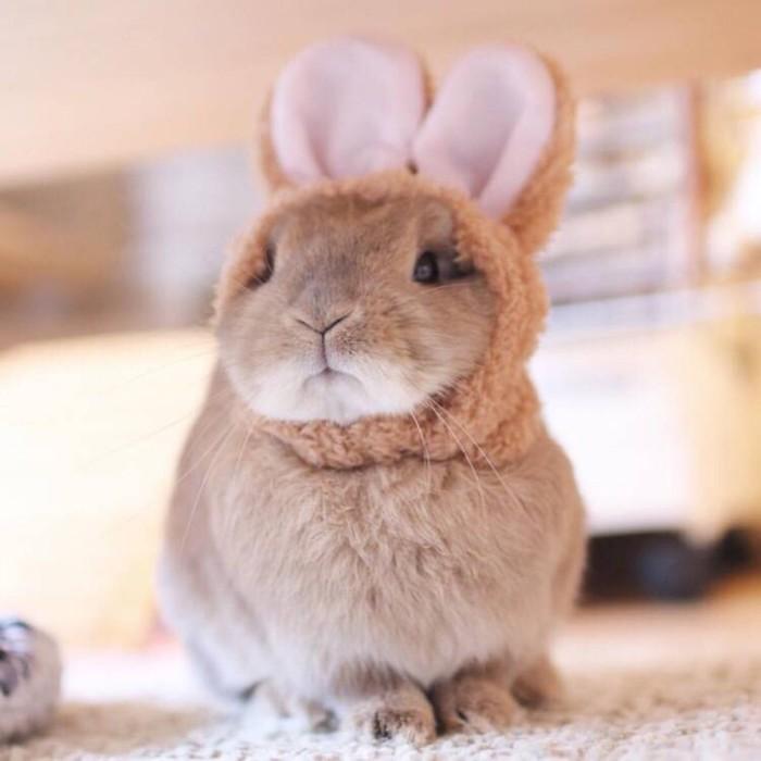 เหตุผลที่ต้องเลี้ยงกระต่าย