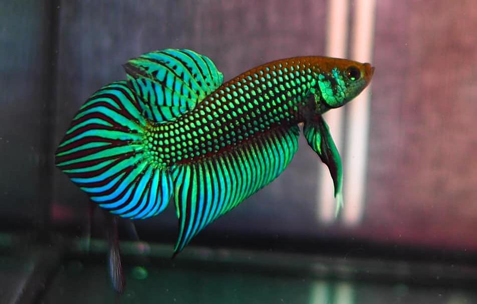 ปลาที่นิยมเลี้ยง