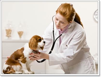 อาการที่ควรสังเกตสุนัข