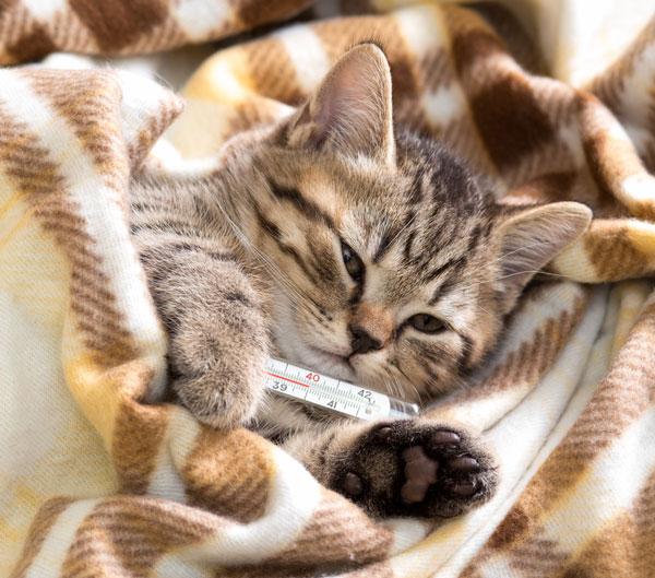 โรคนิ่วในไตแมว