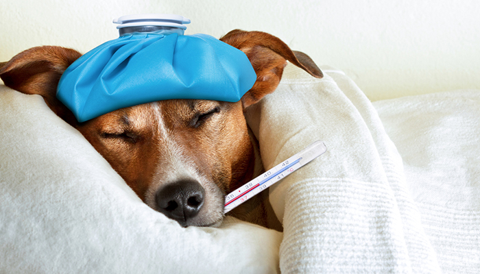 โรคไตในสุนัข โรคที่อันตรายของสุนัข