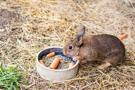ก่อนที่จะ เลี้ยงกระต่าย มือใหม่ควรศึกษาข้อมูลให้ดีเสียก่อน