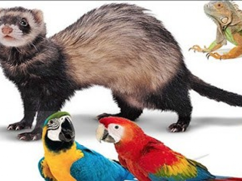 สัตว์เลี้ยง Exotic Pets คืออะไร