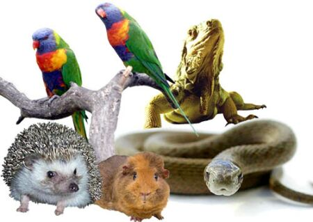 สัตว์เลี้ยง Exotic Pets ที่คนไทยชอบเลี้ยงมาก