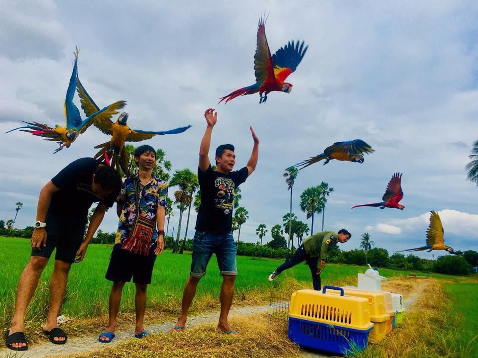 สายพันธุ์นกบินอิสระ นกบินขนาดเล็ก