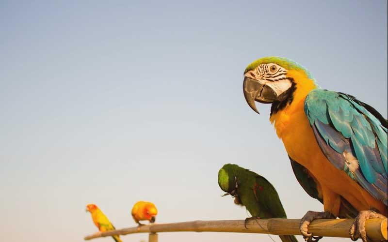 สายพันธุ์นกบินอิสระ สายพันธุ์ใดที่นำมาฝึกให้บินอิสระได้