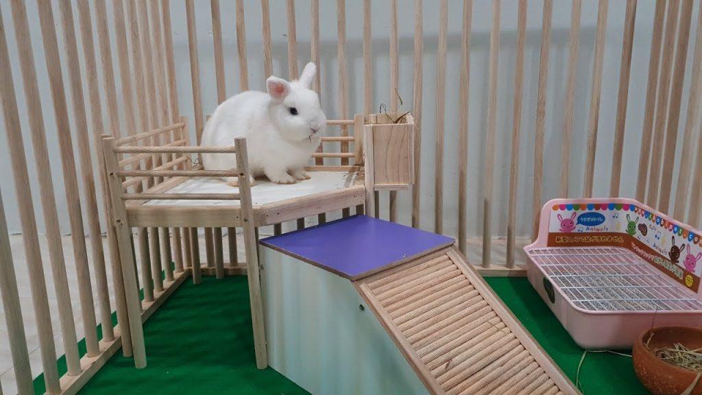 อุปกรณ์เลี้ยงกระต่าย
