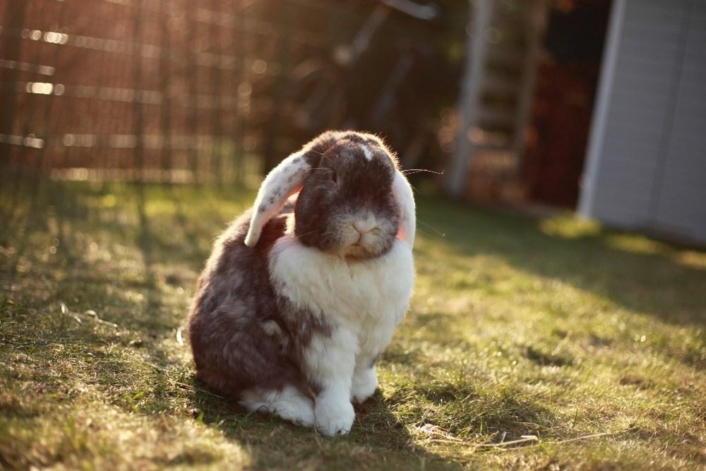 เลี้ยงกระต่าย สัตว์ที่บอบบางกว่าสัตว์อื่น ๆ