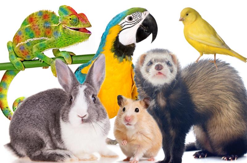 Exotic Pets สัตว์เลี้ยงที่เรามักจะคุ้นเคย