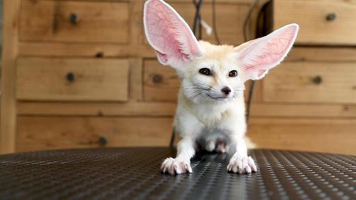 Exotic Pets สัตว์แปลกน่าเลี้ยง ที่ลองเลี้ยงแล้วจะหลงรัก