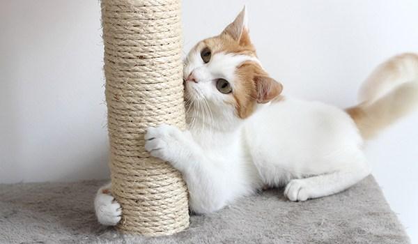 วิธีเลี้ยงแมว ต้องหาที่ฝนเล็บให้แมว