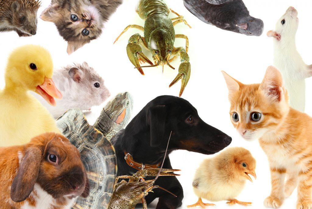 สัตว์เลี้ยง Exotic Pets สัตว์แปลกยอดฮิตที่นิยมเลี้ยง