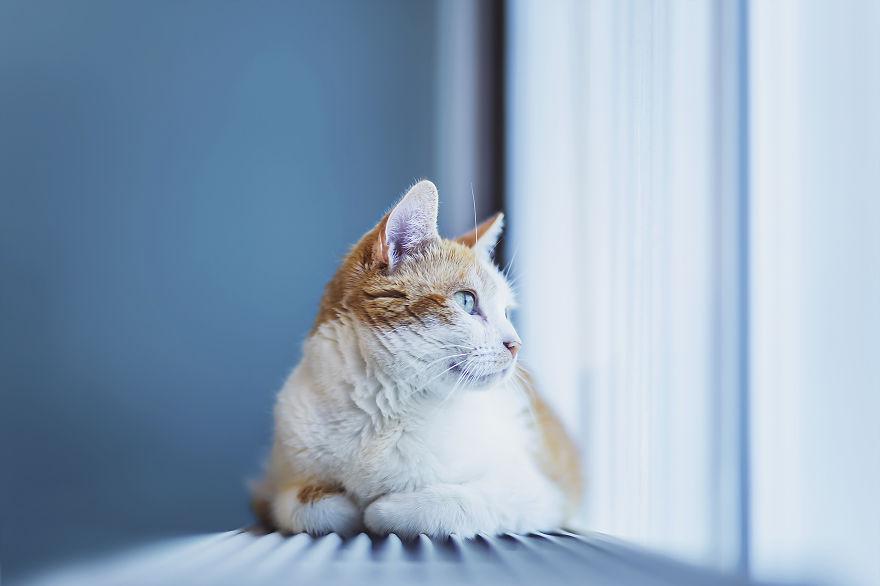 สาเหตุแมวขนร่วง บวกกับวิธีการดูแลเบื้องต้น