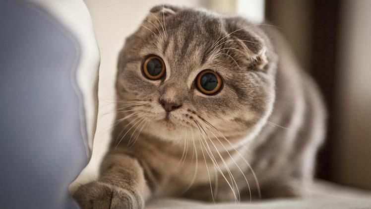 สาเหตุแมวขนร่วง ไม่ต้องกังวลดูแลได้ให้กลับมาขนแน่น ขนสวยได้แน่นอน