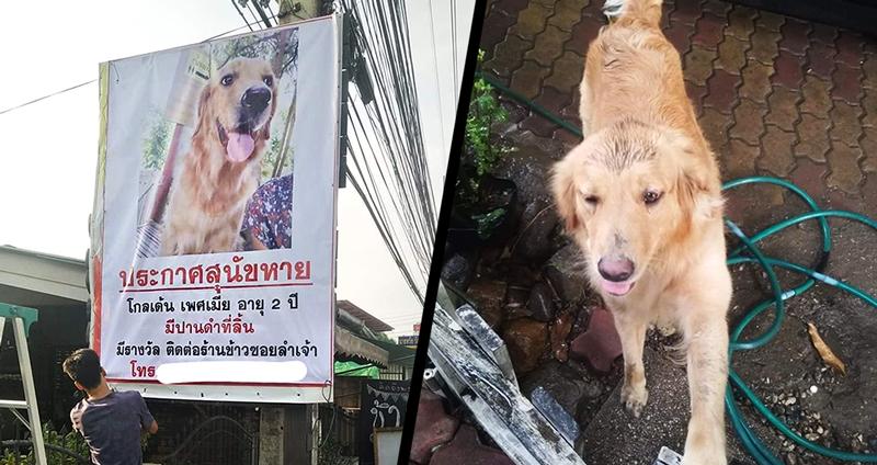 เคล็ดลับเรียกหมาแมว ที่หายออกจากบ้านให้กลับมาหาเจ้าของได้อย่างปลอดภัย