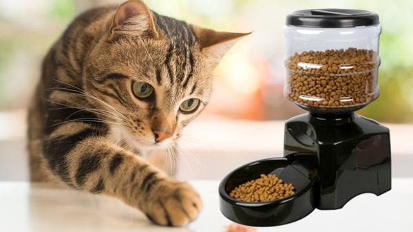 4 อาหารแมวเกรดดี ที่แมวทานแล้วสุขภาพดีไม่เสี่ยงเป็นโรค