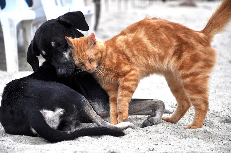 5 โรคของหมาและแมว โรคสัตว์เลี้ยงที่มักเป็นในฤดูฝน