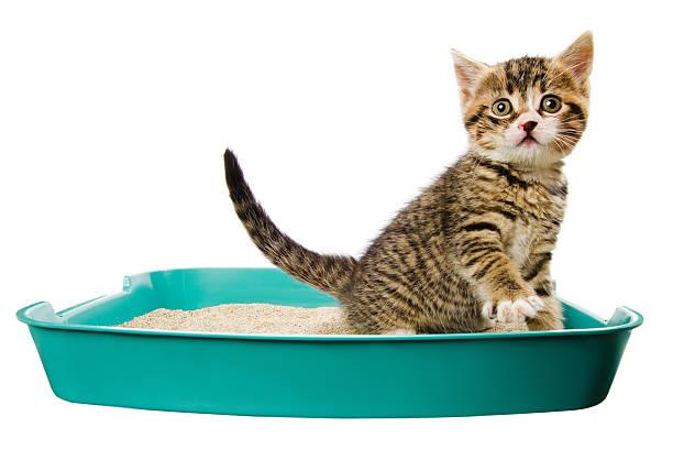 ทำไม กลิ่นปัสสาวะแมว ถึงฉุน...เจ้านายเกือบเป็นลม ทาสแมวจะต้องดูแลยังไง