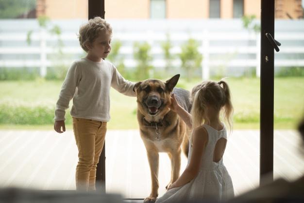 สุนัขพันธุ์ German Shepherd สุนัขในดวงใจของใครหลายคน