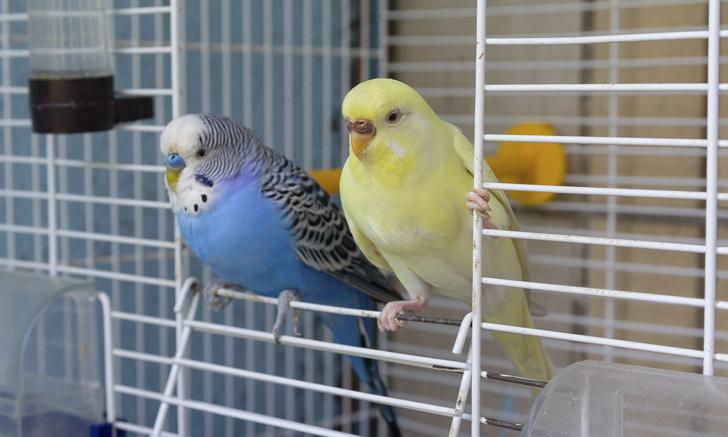 ประโยชน์ของการเลี้ยงนก ค่าใช้จ่ายในการเลี้ยงนกมีราคาถูก