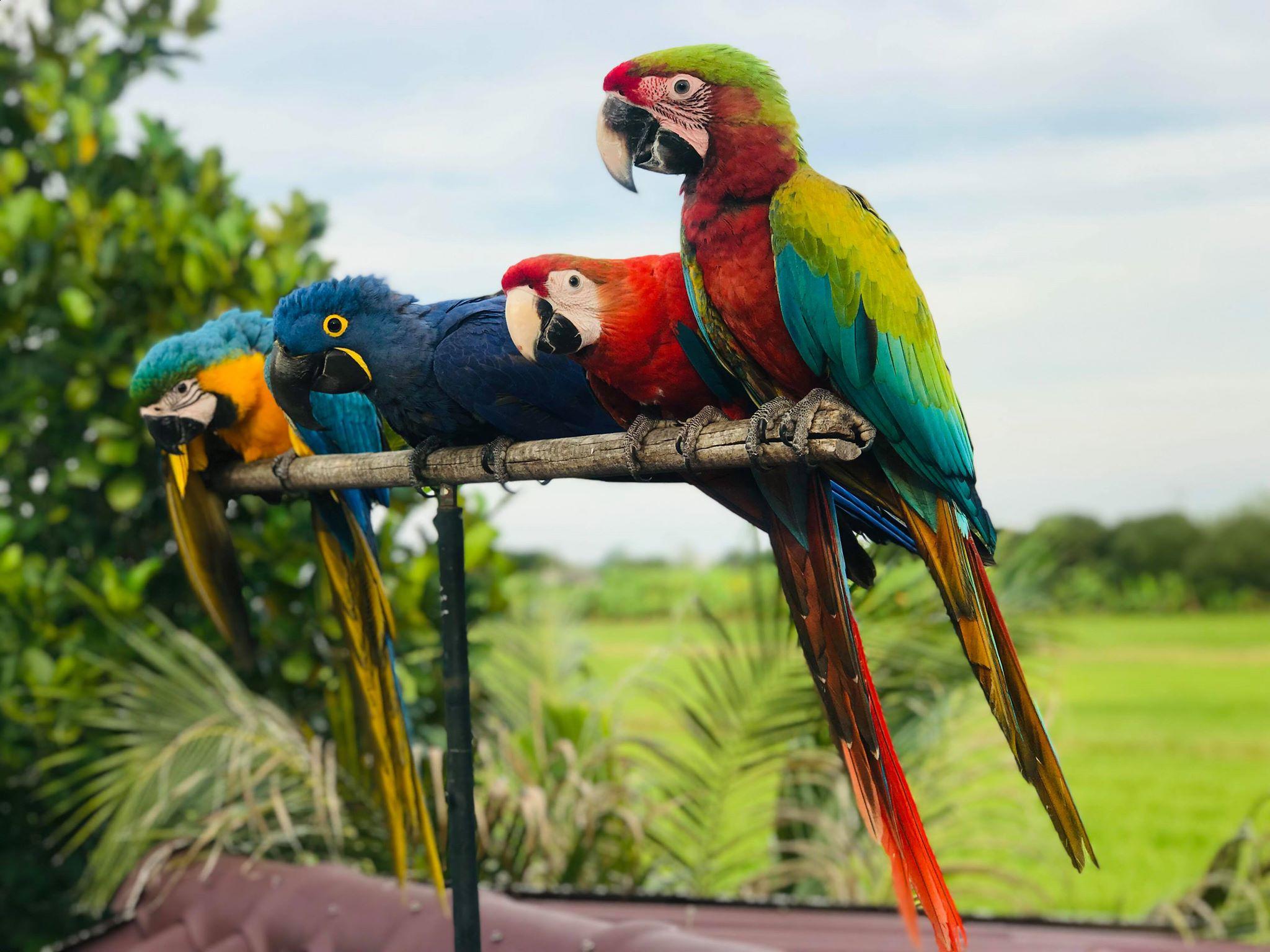 ประโยชน์ของการเลี้ยงนก ช่วยสร้างความเพลิดเพลินภายในบ้าน