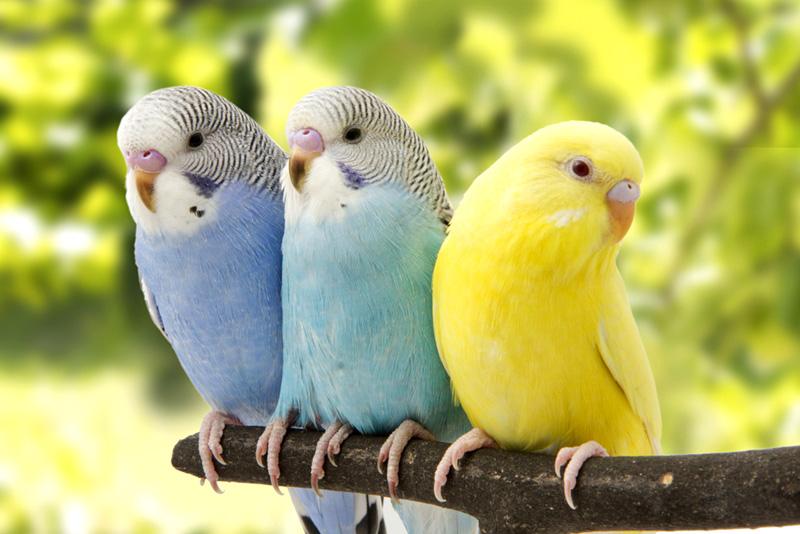 ประโยชน์ของการเลี้ยงนก นกเป็นเพื่อนคู่หูคู่ใจเราได้