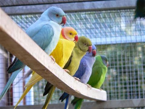 ประโยชน์ของการเลี้ยงนก