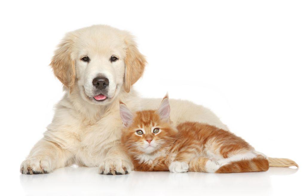 เรื่องนี้ควรรู้ไว้!โรคไตในสุนัขและแมว
