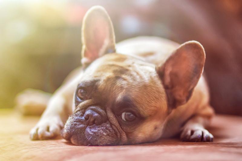 โรคไตในสุนัขและแมว อาการที่ต้องสังเกต