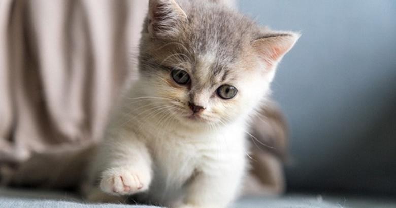 3 อันดับ สายพันธุ์แมวไทยหายาก ที่ทาสแมวควรอนุรักษ์สายพันธุ์ไว้