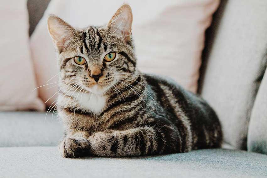 พฤติกรรมของแมว ที่แสดงถึงความรักเจ้าของแต่คุณอาจจะไม่รู้