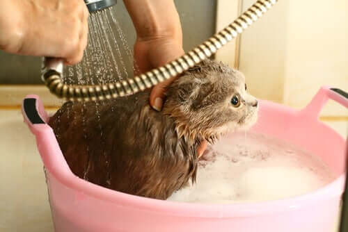 วิธีอาบน้ำให้แมว ที่มีขั้นตอนง่ายๆ