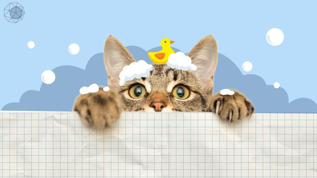 วิธีอาบน้ำให้แมว