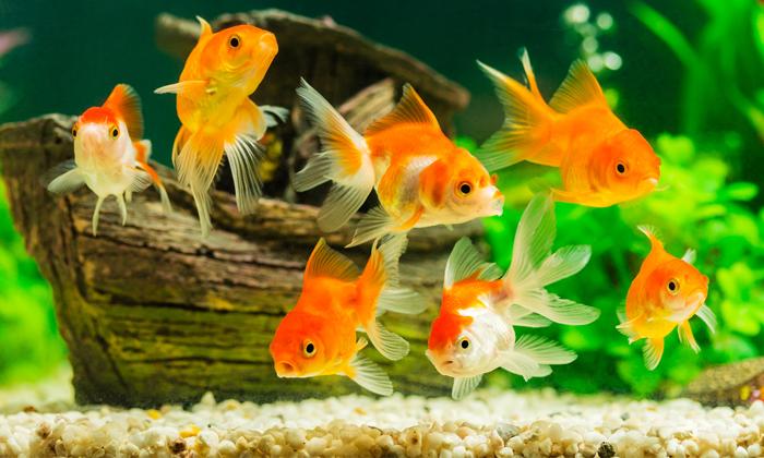 สัตว์เลี้ยงตัวน้อย ที่จะมาสร้างสีสันให้ห้องมีความสวยงามมากขึ้น