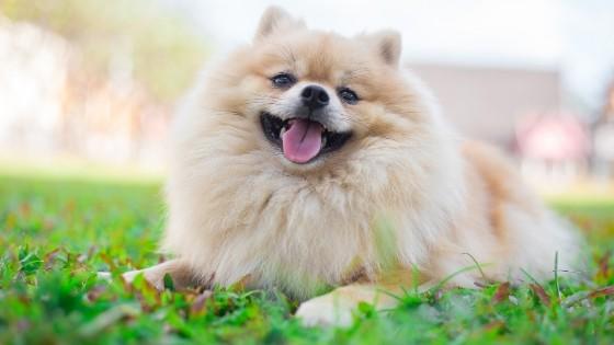 สายพันธ์สุนัขเลี้ยงง่าย ที่เข้ากับคนง่ายทำให้คุณหลงรักอย่างเต็มหัวใจ