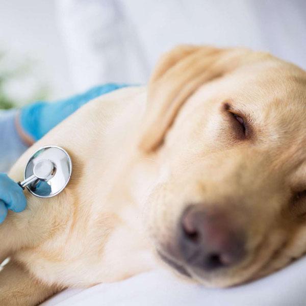 อาการโรคซึมเศร้าของสุนัข ที่อาจเป็นสัญญาณเตือนเบื้องต้นของสุนัข