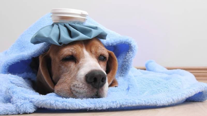 อาการโรคซึมเศร้า ของสุนัข ที่เจ้าของอาจจะยังไม่เคยรู้มาก่อน