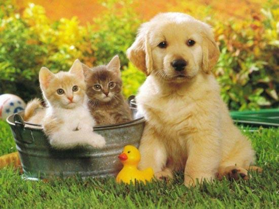 ประโยชน์ของสัตว์เลี้ยง มีมากกว่าที่คุณคิดและคุณจะหลงรักเจ้าสัตว์เลี้ยงมากขึ้น